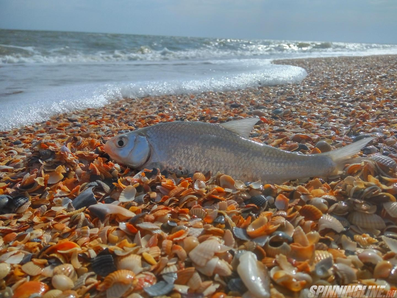 На азовском море рыбалка