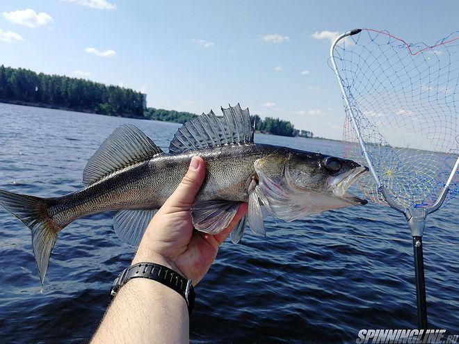 Изображение 7 : Три дня на Рыбинском водохранилище.